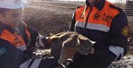 Упитанную кошку вытащили из бетонной плиты в Караганде